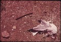 DEAD GULL NEAR ENTRANCE TO GREAT KILLS PARK ON STATEN ISLAND - NARA - 547947.tif
