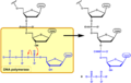 DNA synthesis EN.png