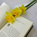 Daffodils on a book (bookstagram).jpg