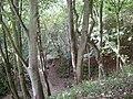 Danes Dyke - geograph.org.uk - 652393.jpg