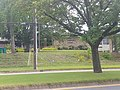 Davis Community Library.jpg
