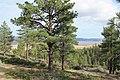 Davis Creek Park - panoramio (54).jpg