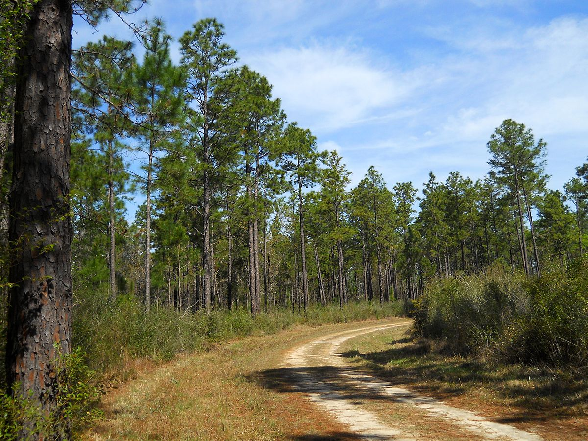 De Soto National Forest Wikipedia