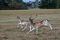 Dear roe deer.jpg