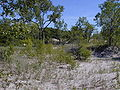 DeerCreekMarsh Dune.jpg