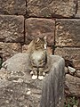 Delphi 053.jpg