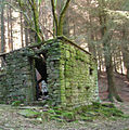 Dereliction in the woods - geograph.org.uk - 202772.jpg