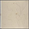 Design for a Plate Decorated with a Bird and Plant Motifs MET DP809542.jpg