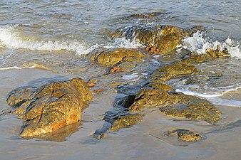 Detalle rocas de Frouxeira.jpg