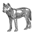 Dingo (PSF).png