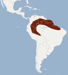 Distribution of Lophostoma carrikeri.png
