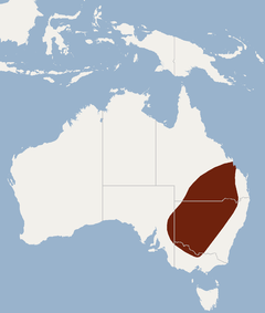 Distribution of Nyctophilus corbeni.png
