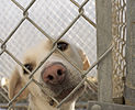 Dog in animal shelter in Washington, Iowa.jpg
