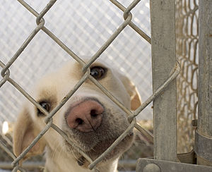 Animal shelter - Photograph of a dog at a no-kill animal shelter in Washington, Iowa