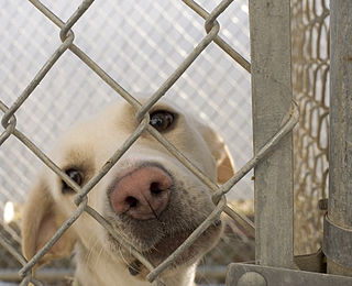 Animal shelter facility that houses and disposes of homeless, lost, or abandoned animals