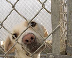 pet adoption wikipedia the free encyclopedia pet adoption 250x203