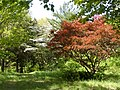Dogwood-Japanese Maple 077.jpg