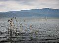 Dojran Lake 103.JPG