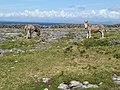 Donkey field - geograph.org.uk - 1469370.jpg