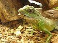 Dragon d'eau vert.jpg