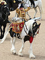 Drum horse 2007.jpg