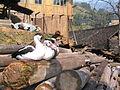 Ducks 9480.jpg