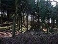 Durford Wood - geograph.org.uk - 1132122.jpg