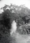 ETH-BIB-Bachvegetation am Makungu-River-Kilimanjaroflug 1929-30-LBS MH02-07-0461.tif