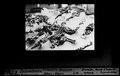 ETH-BIB-Iguanodan, Gisement de Bernissart, Situs Abguss-Dia 247-F-00536.tif