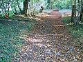 Early Autumn in Knighton Wood - geograph.org.uk - 593186.jpg