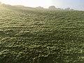 Early morning sun in Devon (30533071645).jpg
