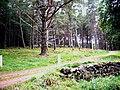 East entrance to Boggiefern - geograph.org.uk - 966336.jpg