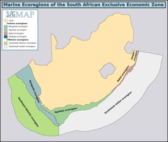 List of marine animals of the Cape Peninsula and False Bay