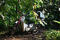 Eden Project 117 Cornwall UK.jpg