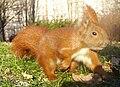Eichhörnchen im Lauf.jpg