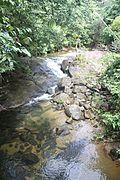 El Yunque nat park Rio Sabana (Rio Blanco) PR IMG 2070.JPG