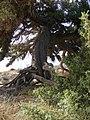 Elaphonisi - panoramio (31).jpg