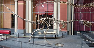 <i>Elaphrosaurus</i> genus of reptiles (fossil)