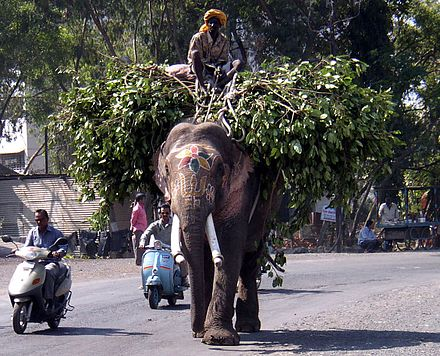 Working elephant as transport Elefant pune.jpg