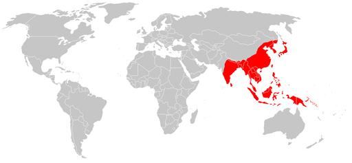 Encephalites japonaise