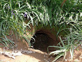 Jazvec lesný (lat. Meles meles) - vstup do nory
