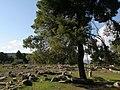 Epidaurus (3380094912).jpg