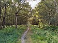 Epping, Birching Coppice on Essex Way.jpg