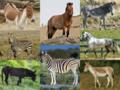 Equus species.png