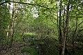 Erlenbruch Langwiesenholz 09.jpg