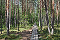 Estonia Endla Nature Reserve 07 Forest.jpg