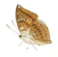 EuthaliaJama237 1a.jpg