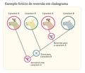 Exemplo fctício de reversão evolutiva (cladograma).png