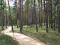 Extermination Camp of Sobibor, Poland (181630575).jpg