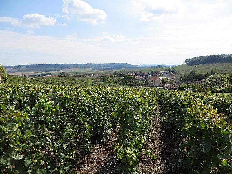 Vue du vignoble et du village depuis le côteau de Fèrebrianges